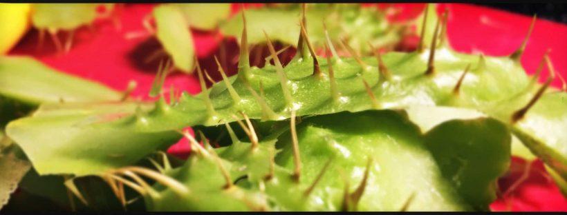 Zucchina spinosa (chayote) in pastella